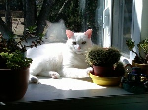 Noel, the Christmas Cat