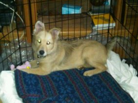First day home 3.9.11