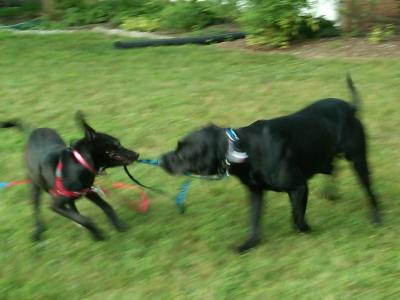 Lulu and Mojo playing