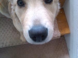 Sofie always sticker her nose in everything
