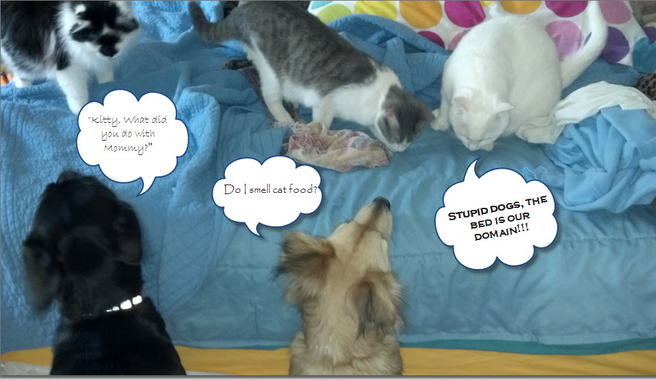 dog.cat bed