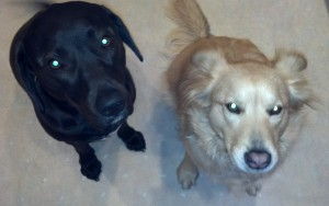 Mom, can you solve a problem?  Lulu says that black dogs are smarter than blond dogs.  Is that true?