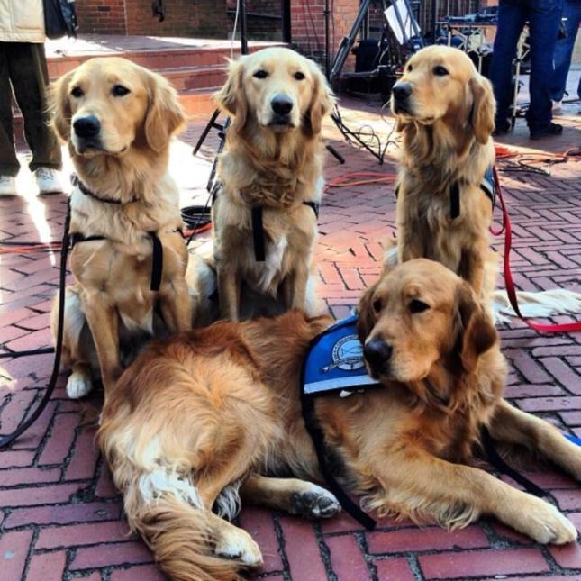 helper dogs
