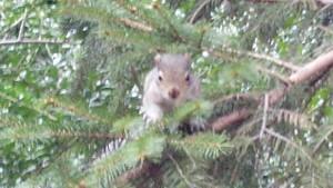 Baby Squirrel #1