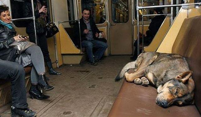 Moscow-Train-Dog-2