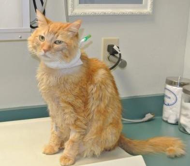 Leo with feeding tube