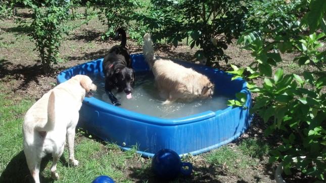 Amy's Pool