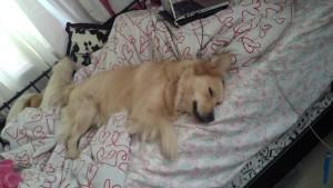 Sofie Sleeping
