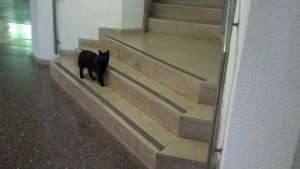 Cat in the Humanities Building at Hebrew U