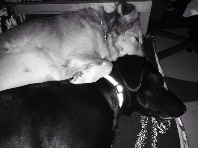 Sleeping Sisters 3.1