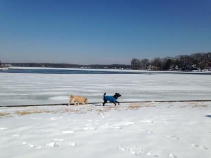 river 2 feb 2014