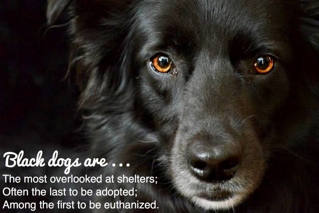 Love A Dog Rescue And Sanctuary