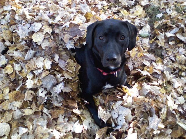 leaves2010
