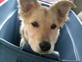Puppy Sofie
