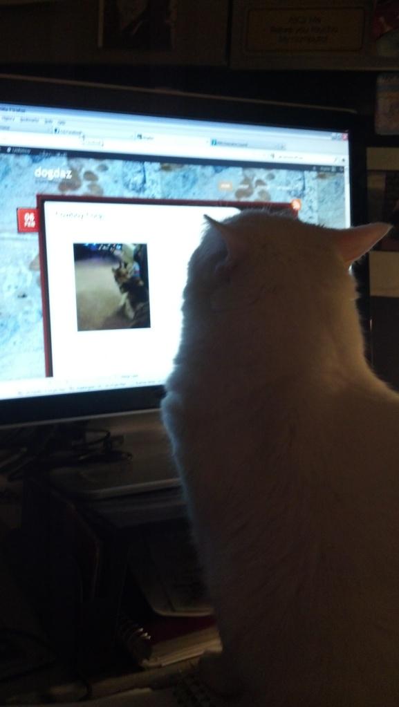 Blogging cats