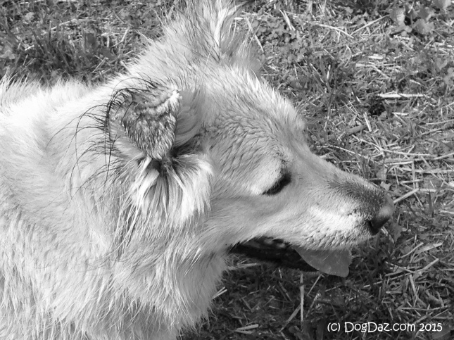 5.17.15 Wet Sofie Dog