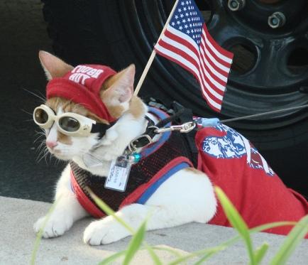 cool-patriotic-cat