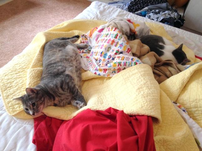 Cat helpers