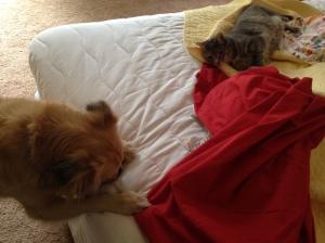 Sofie Mini Bed