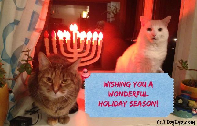 Hanukkah Cats 2015