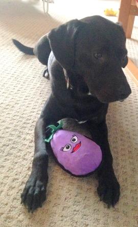 gift eggplant