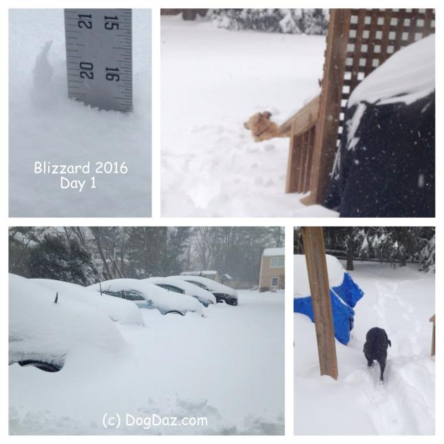 Blizzard day 1