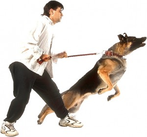 dog-barking-lunging-on-leash-01-300x279