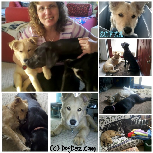 Sofie puppy collage