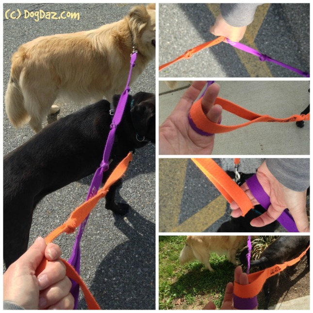 Two leashes