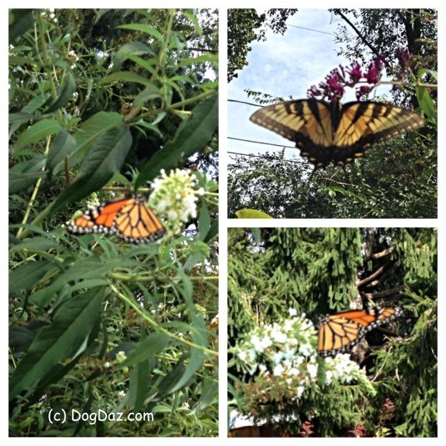 more-flutter-9-23-16