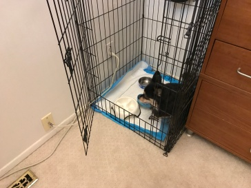Charles eats safely in his kennel